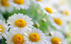 Sometimes we need daisies more than roses; try too hard to be deep and you'll end up sounding shallow.