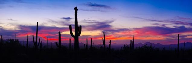 saguaro-np-sunset-120